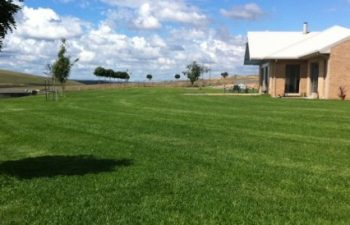 What's the Best Type of Grass for Drought Affected Areas?