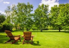 Planting Trees In Lawn Areas- 6 Steps To Follow.