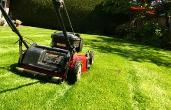 A Guide to the Best Lawn Fertiliser and application process