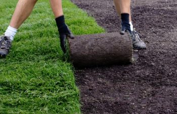 How Long Does Turf Take to Bed In? Rivers Edge Turf