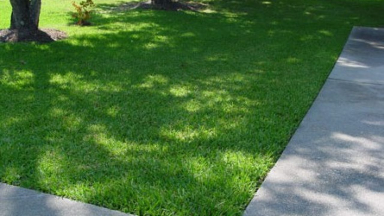 Wondrous Easy Guide To Growing Couch Grass From Seed Rivers Edge Turf Dailytribune Chair Design For Home Dailytribuneorg