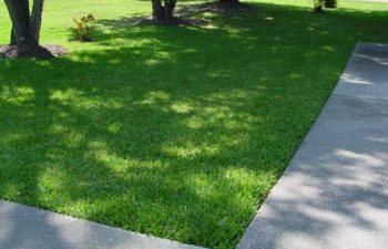 Growing Couch Grass From Seed – Keeping Our Carbon Footprint Low!