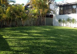 Which types of turf are best for shady areas? | Shade Tolerant Turf