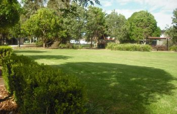 Choosing the Right Grass for Your Home