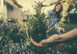 11 Sustainable Gardening Ideas for the Home