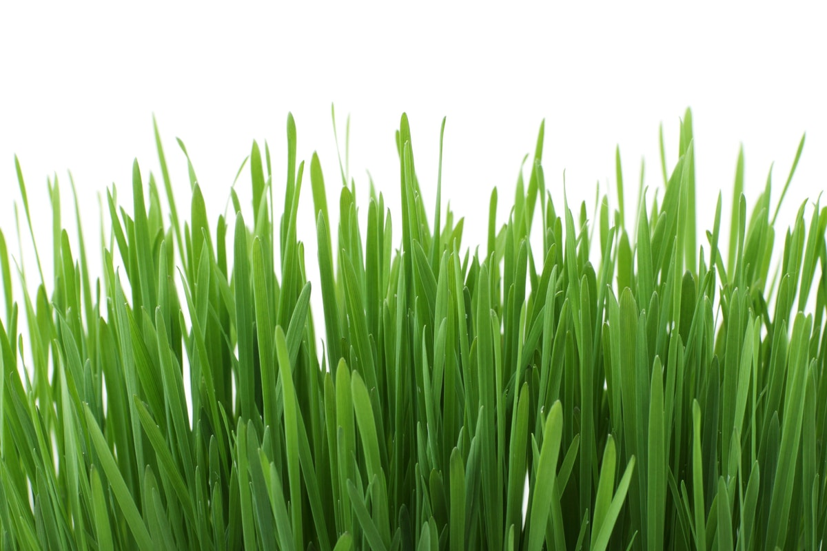 Lawn Games Are Better On Artificial Grass