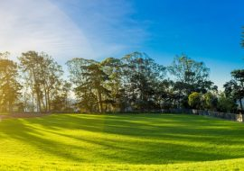 The Best Types of Grass for Large Yards and Properties