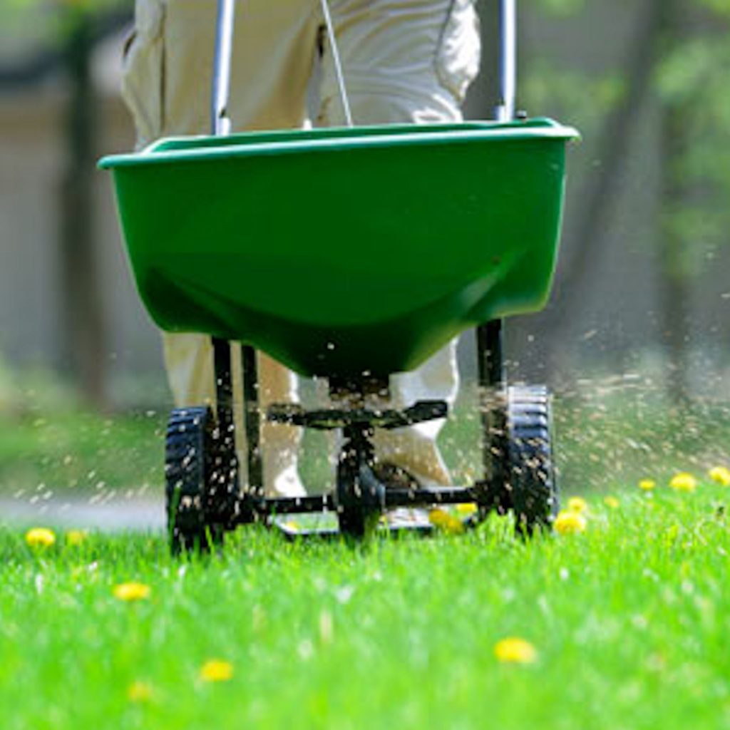 How To Keep Your Lawn Green During Winter - 5 Expert Tips