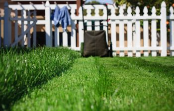 Lawn Envy- How To Obtain The Perfect Lawn