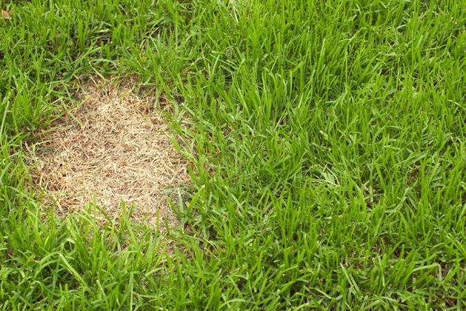 7 Reasons Why Your Lawn Colour Has Changed