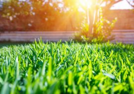 How To REALLY Love Your Lawn- 4 Things You Should Do Every Week