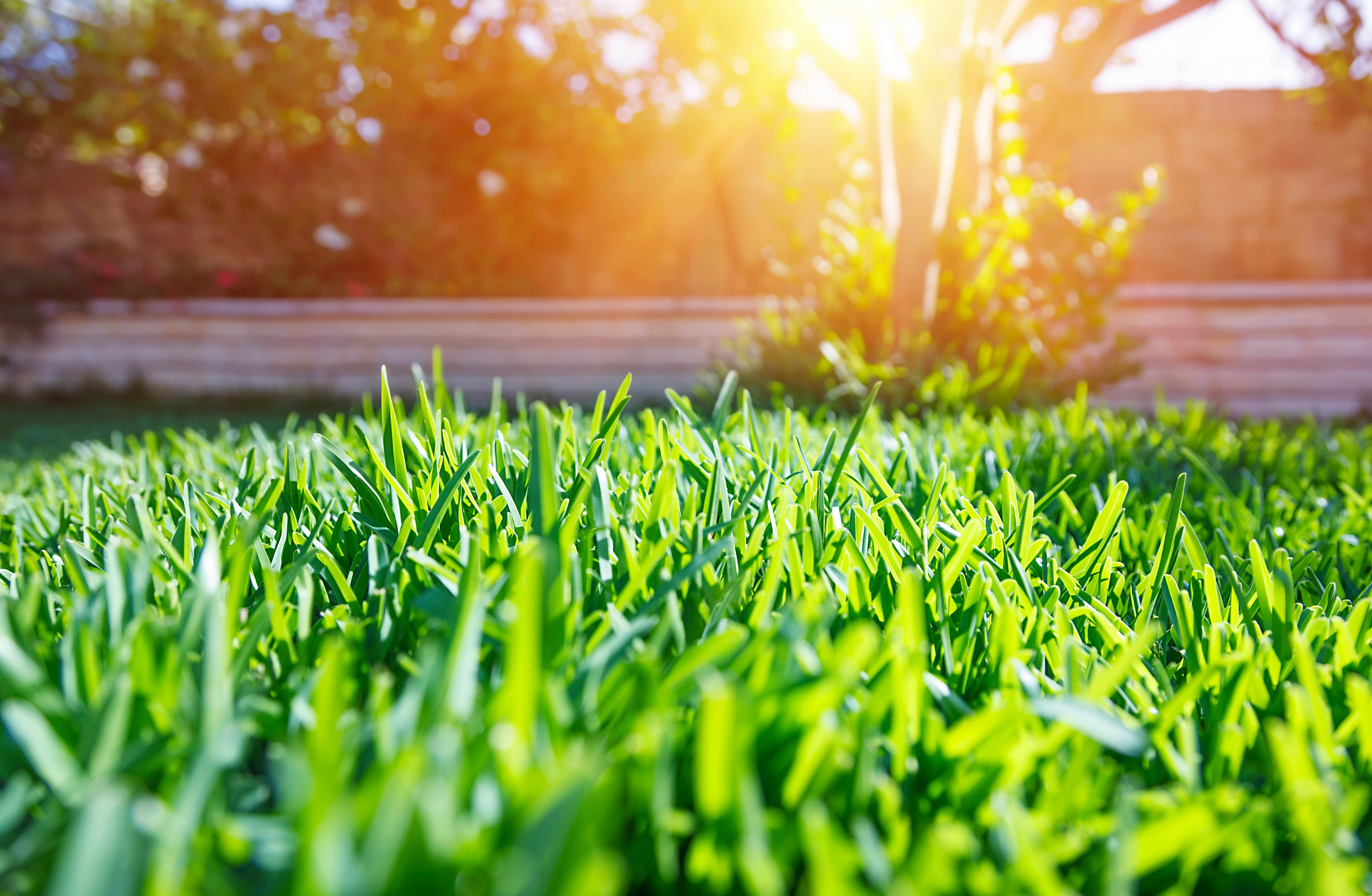 how to maintain palmetto grass