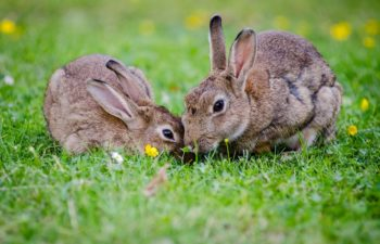 How To Identify And Get Rid Of Unwanted Pests On Your Lawn.
