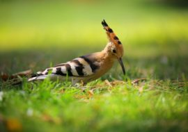 Common Lawn Pests And What You Can Do About Them