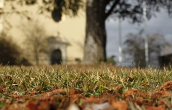 How To Deal With Pests And Bugs On Your Lawn