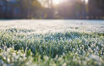 How To Keep Your Lawn Green During Winter – 5 Expert Tips