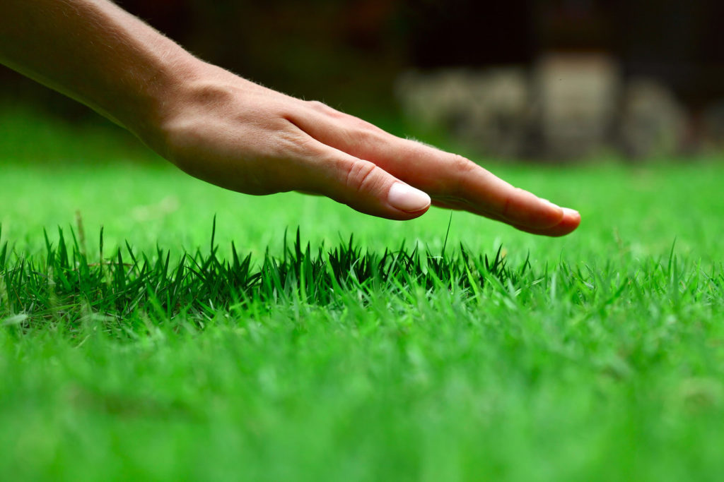 Caring For Your Lawn - Water Restrictions