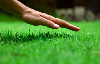 Cut Back On Lawn Maintenance By Using Alternative Grass Species