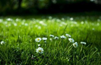 8 cheap and simple ways to kill weeds in your yard