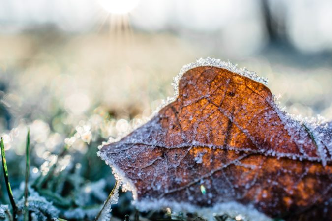 Why You Should Keep Off Your Lawn During A Frost
