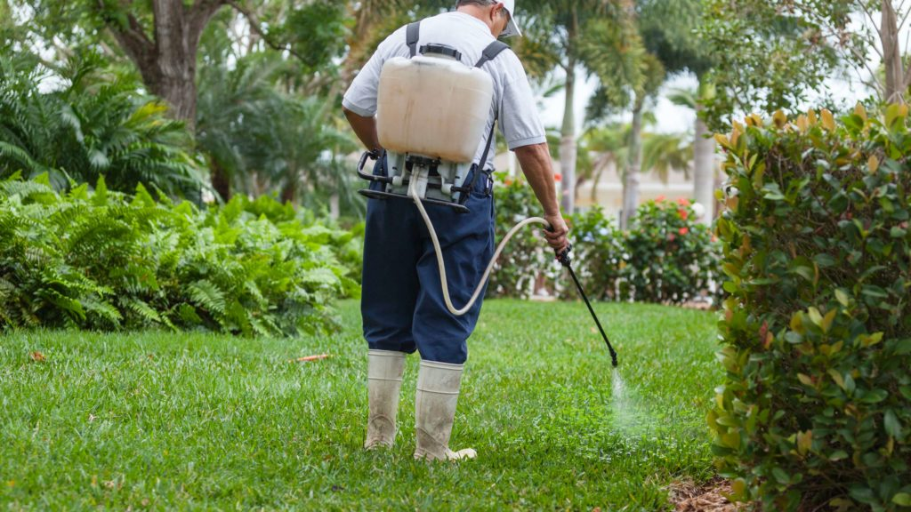 Spraying lawn with insecticide