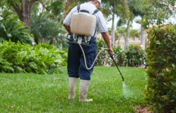 How To Kill Weeds Without Killing Your Lawn – 5 Strategies That Work!