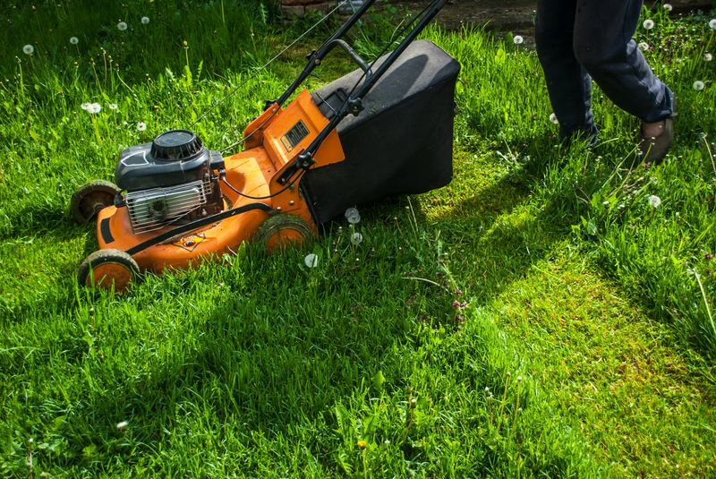 Repairing Scalped Lawn - Mowing
