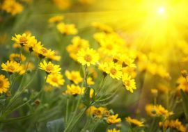Sun Mapping – How It Can Help You Get The Most Out Of Your Garden