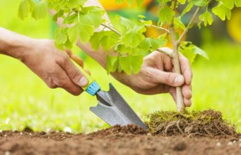 Planting Trees In Your Garden Can Save You Hundreds On Your Electricity Bills – Here's How!