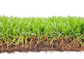 How To Know When To Dethatch Kikuyu Grass