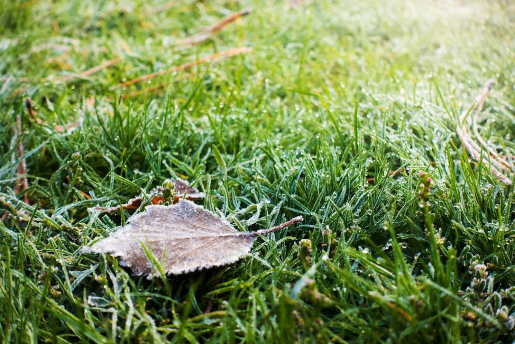 Winter-Proof Your Lawn - Collecting Leaves